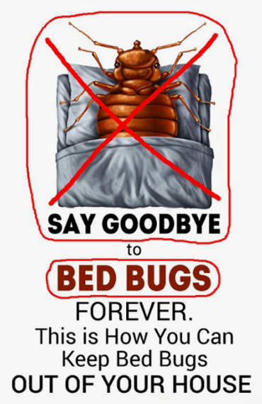 Bed Bug Pest Control in Sharjah